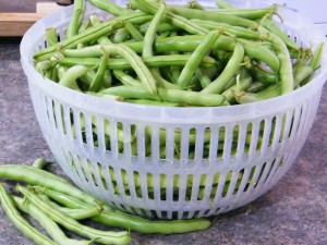green beans for canning
