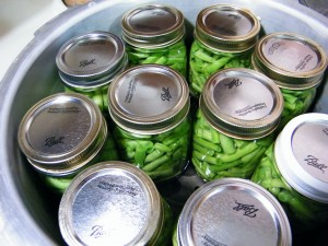 green beans in jars for canning