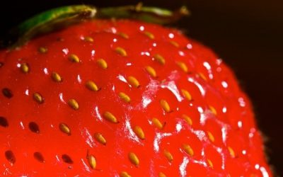 Great Uses for Dehydrated Strawberries