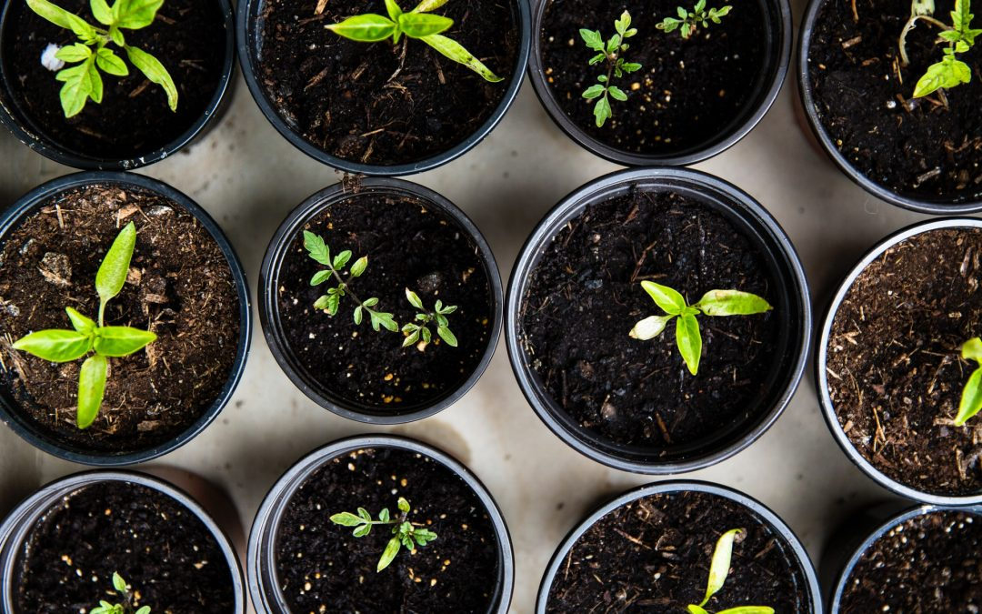 From Grocery to Garden: 40 Plants You Can Regrow from Scraps