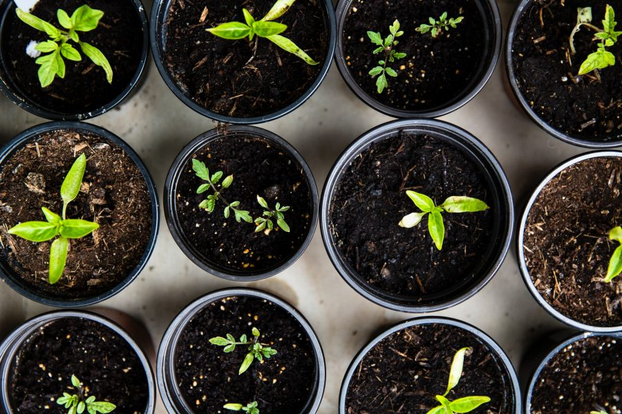 plants you can regrow