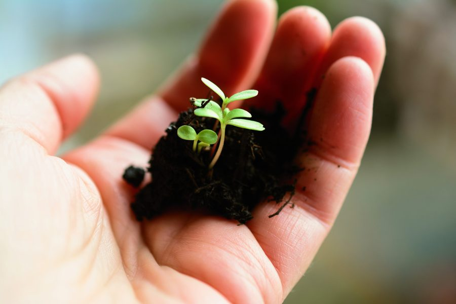 A hand holding a seedling