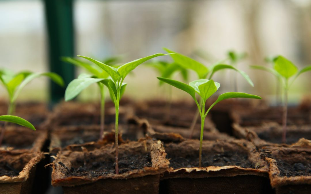 When to Start Seeds Indoors: The Tips and Tricks You Need to Know